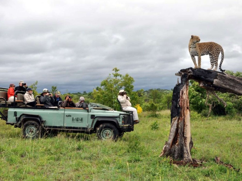 Safari and Tours in South Africa