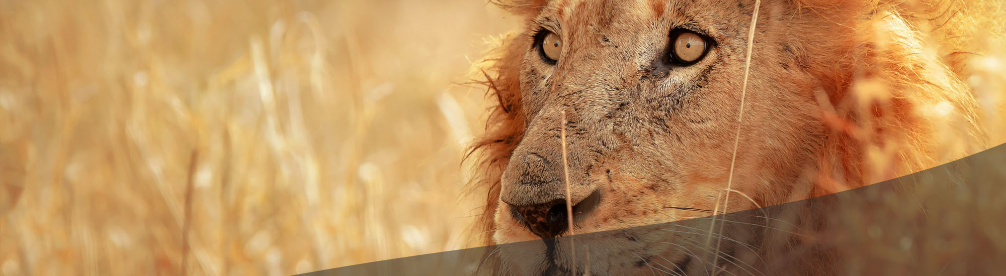 Tour and Safari in the amazing South Africa