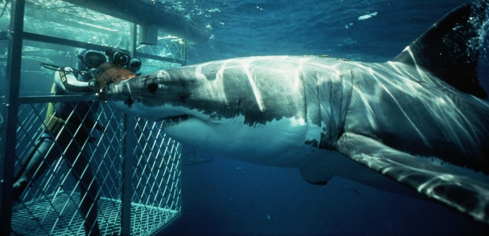 White Shark Cage Diving, Mossel Bay