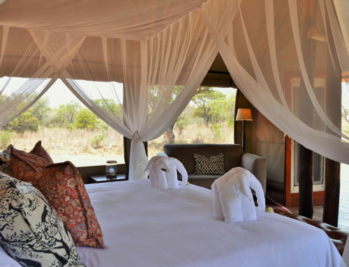 Safari Plains – Standard Tent – Mabula Game Reserve
